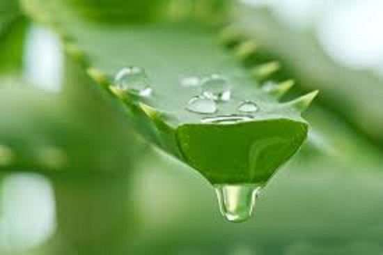 Aloe Vera Benefits For Healing And Beauty